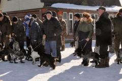 2019 г. IХ Воскресенская ежегодная открытая выставка охотничьих собак.