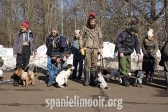 Ринг русских охотничьих спаниелей - щенки