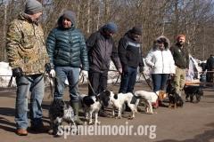 Ринг русских охотничьих спаниелей - суки