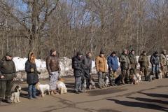 Ринг русских охотничьих спаниелей - кобели