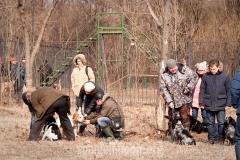 2008 г. Московская областная выводка русских охотничьиx спаниелей МООиР